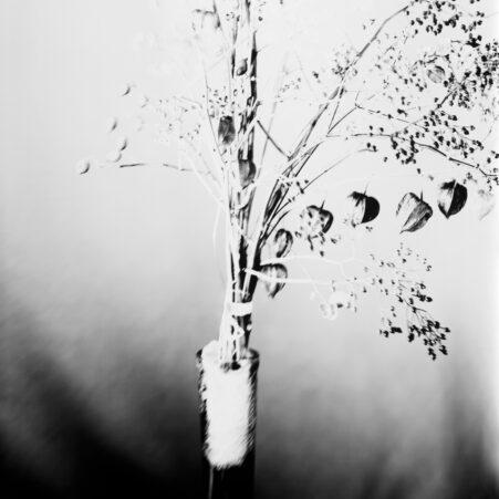 Lampionblumen