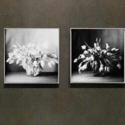 Tulips Swarz couple_wall edited_WEB
