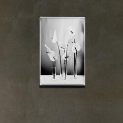 Calla_weiss frame_wall IMAGO_LQ_CROP