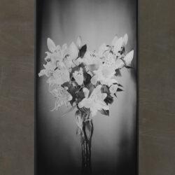 Lilien_Long Format_Black