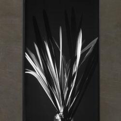 Palme shatten_rectangular_Format_Black